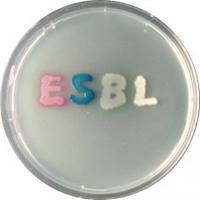CHROMagar ESBL 5000ml + supplement