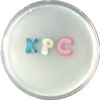 CHROMagar KPC 5000ml + supplement