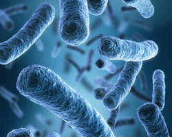 Respiratory Pathogens